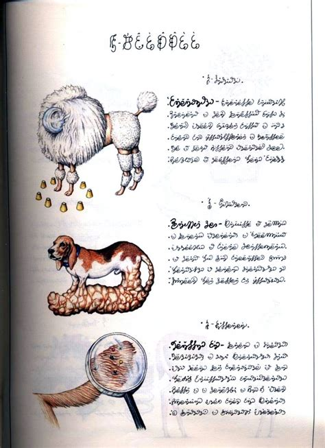 libro legendary codex seraphinianus semi licit copy of a semi legendary book of the weird boing boing