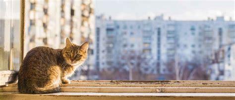 come allontanare i gatti dal giardino come allontanare i gatti dal balcone preso luabitudine di