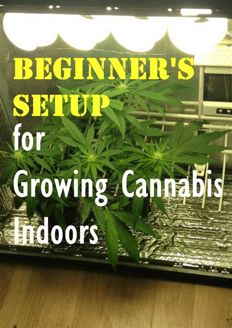 grow tent  growing cannabis  reviews guide