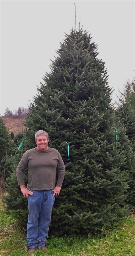largest christmas tree farms ashe now largest tree producer in nation news ashemountaintimes