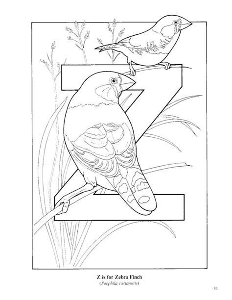zebra finch coloring page bird alphabet coloring pages printable download for kids