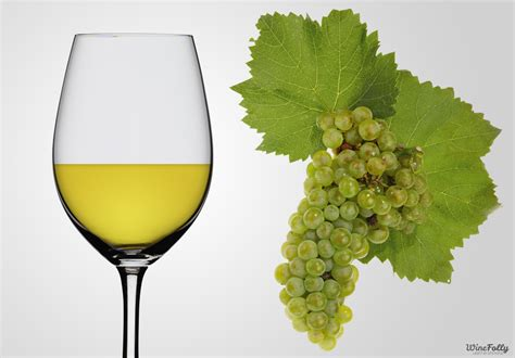 chardonnay color chardonnay wine guide wine folly