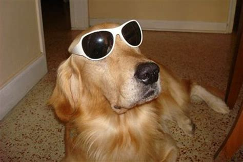 coolest dogs photos dogs in sunglasses reader s digest
