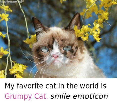 25 best memes about grumpy cat smiling grumpy cat