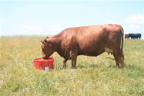 Uniblok Canada Products Cattle Protein Sheep Nutrition