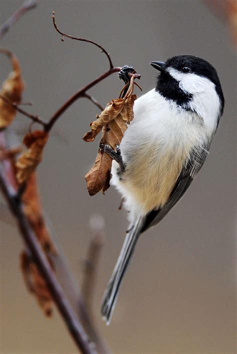 common backyard birds  colorado springs colorado