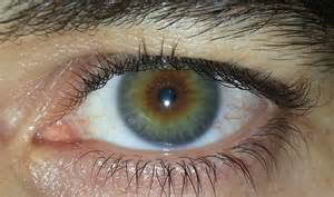 human eye color picture of the color hazel brown hairs