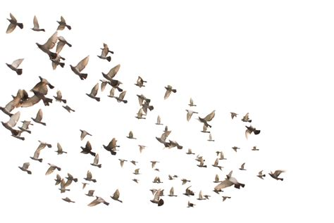 villa manila birds flying high you know how i feel