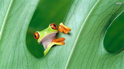rane supreme kermit the frog wallpaper 53 images
