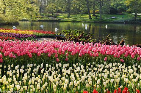 spring flower garden seven million bulbs bloom to mark the beginning of spring