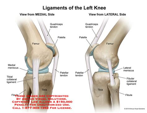 diagram of ligaments in the knee amicus illustration of amicus anatomy knee ligament