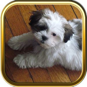 shih tzu food chart shih tzu puzzle android apps on play
