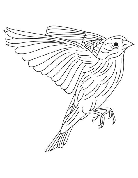 Eastern Goldfinch Coloring Page