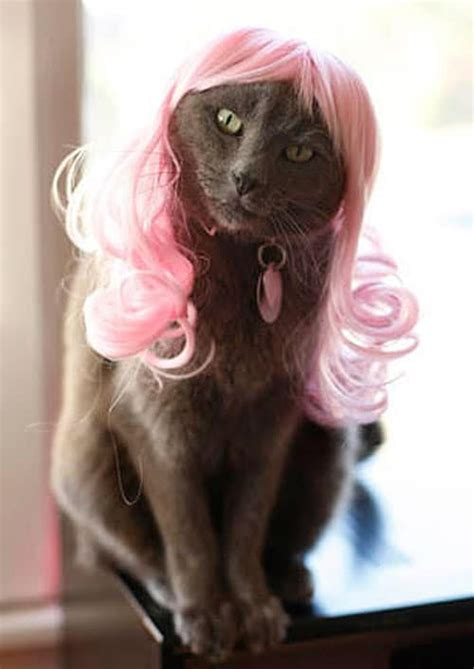 cat wig cat wigs for cat who ve officially nuts bit