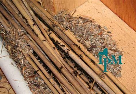 Termite Frass Treatment