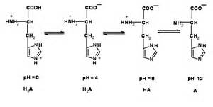 Protonation Definition Aspartic Acid Structure At Ph 7 Www Pixshark