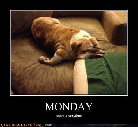 Monday Dog Meme - 22 best oh my god monday morning images on pinterest