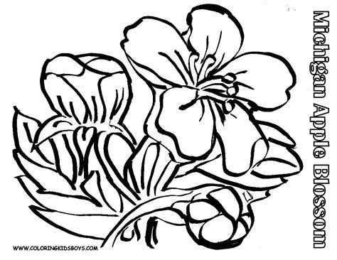 apple bud coloring page coloring pages for all ages