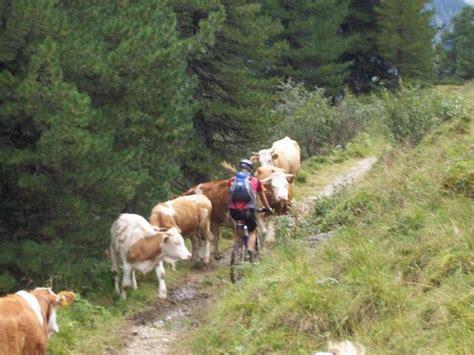 alpen hütte alpen x 2006 kirchberg gt gardasee mtb news de