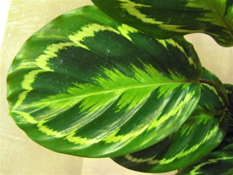 foliage plants names image gallery names of foliage plants