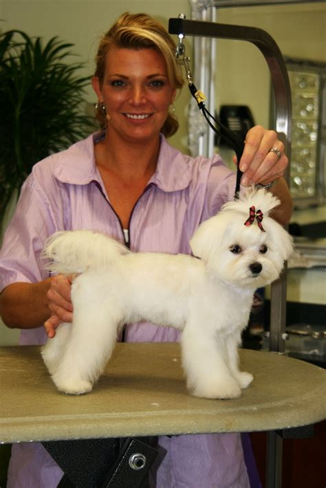 types of dog grooming cuts estimated run time 43 minutes