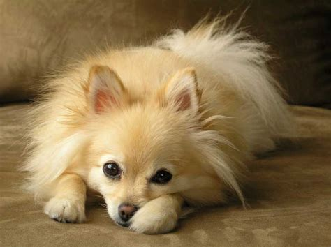 best small breeds for best dogs for small breed pet photos gallery kndkjv5kvj