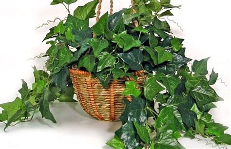 inhouse plants low light indoor plants you can decorate with