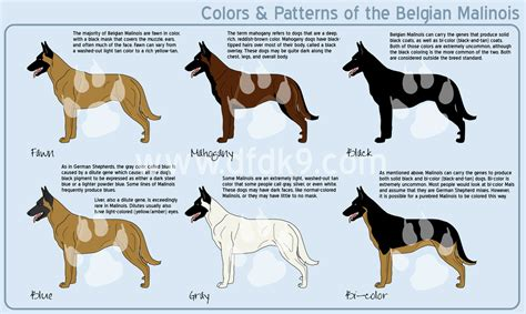 dog color pattern names belgian malinois colors by mausergirl on deviantart