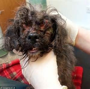 Matted Up by Rspca Hunt Owner Who Abandoned In Box Outside Vets