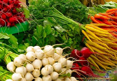 what to plant in vegetable garden now garden vegetables garden ftempo