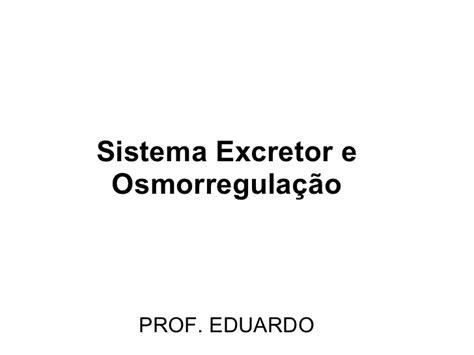 sistema excretor slideshare sistema excretor e osmorregulador