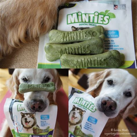 vet recommended dental chews vet recommended minties dental treats golden woofs