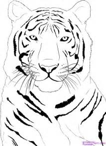 how to draw a white tiger step by step rainforest