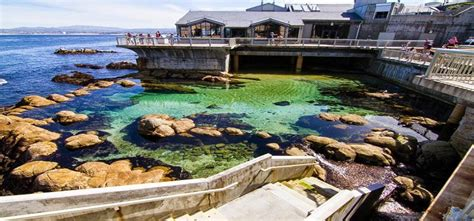 Csu Monterey Bay Mba by Beautiful Monterey Bay Aquarium