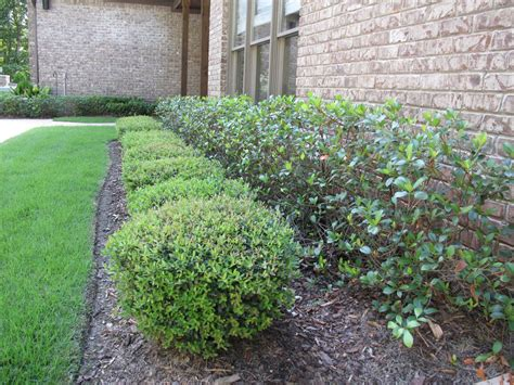 Landscape Shrubs Pictures Smith Shrub Landscape Quality Creative Landscaping Llc