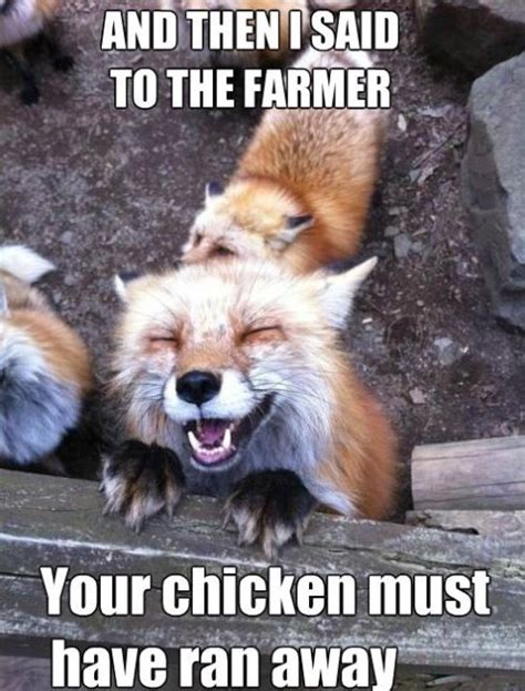 Fox Meme - arctic fox meme