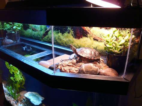 aquarium design for turtles turtle with fish aquarium small turtle aquarium 2017