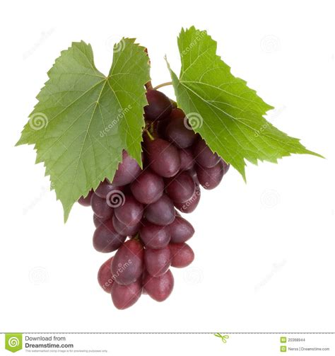 imagenes de uvas con frases frutas negras de la uva con las hojas foto de archivo