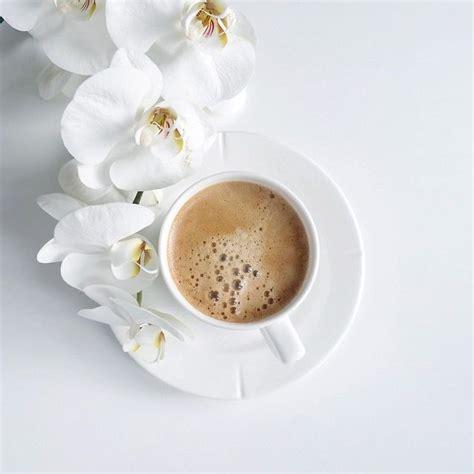 Best 25  Coffee flower ideas on Pinterest   Cafe window, Flower cafe and Coffee flatlay