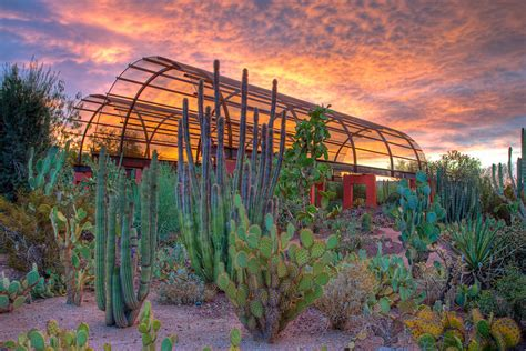Desert Botanical Garden Tucson Summer Survival Guide Play Learn And In Metro