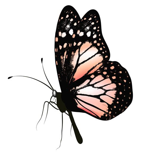 imagenes a blanco y negro de mariposas butterfly png picture clipart gallery yopriceville
