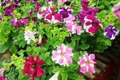 Lu Hias Untuk Teras Rumah tanaman hias pot gantung di teras bebeja