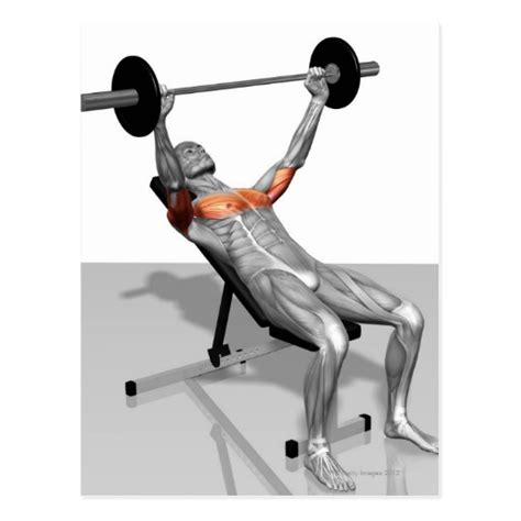 incline bench presses incline bench press postcard zazzle