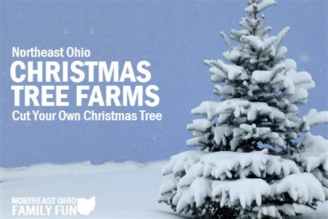 cut your own christmas trees in northeast ohio