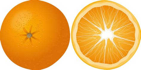 orange fruit mandarin citrus 183 free vector graphic on pixabay