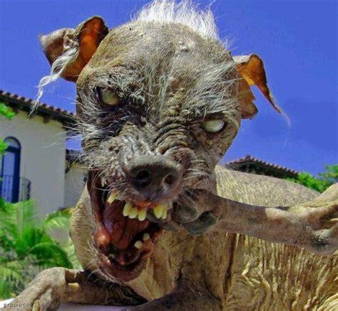 videos imagenes tiernas y graciosas 20 fotos graciosas y tiernas de perros blogerin