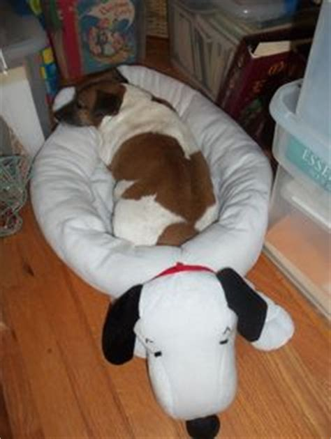 snoopy dog bed snoopy must haves on pinterest snoopy peanuts gang and peanuts snoopy