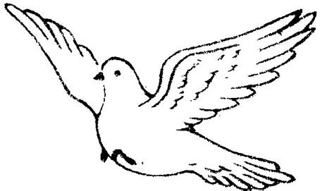 drawings of a sea bird clipart best white doves drawings