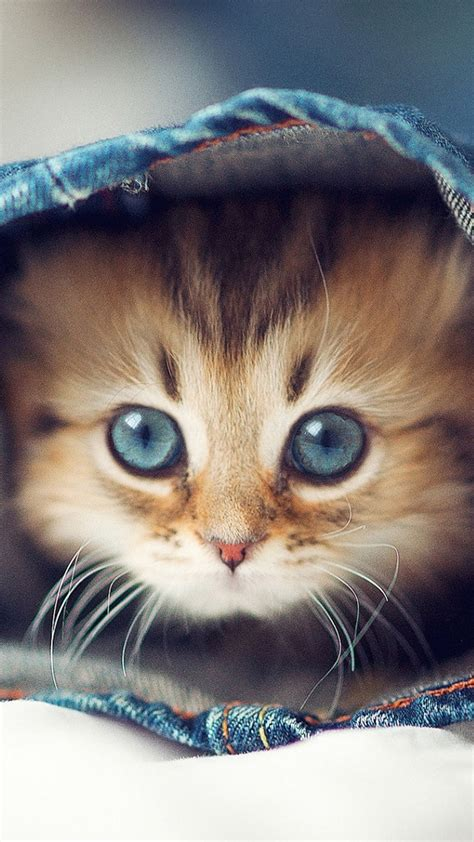 cat wallpaper for iphone 6 60 cute animals iphone wallpapers you would love to download