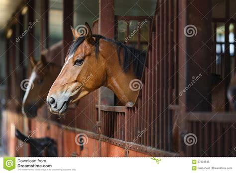 stall pferd pferd im stall stockbild bild innen kopf s 228 ugetier